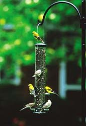 WBU Seed Tube with Chickadees and Goldfinches
