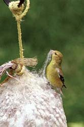 WBU Nesting Ball with Goldfinch