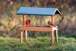 Covered Ground Feeder
