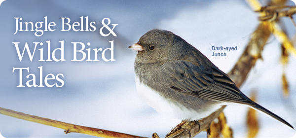Jingle Bells & Wild Bird Tales