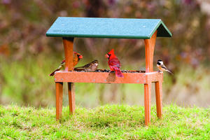 EcoTough Ground Feeder